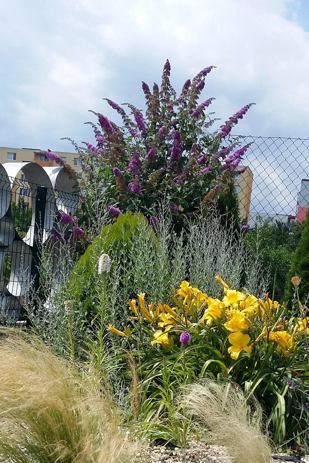 Moderná záhrada - Obrázok č. 25