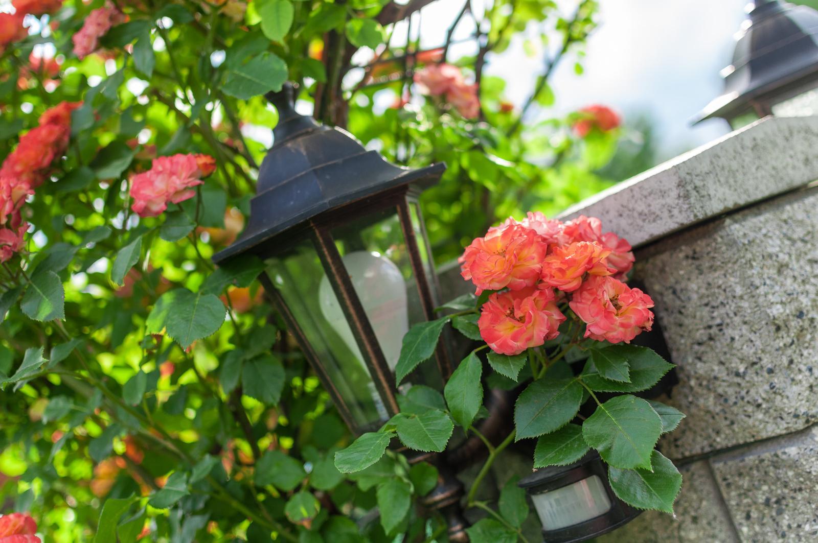 Záhrada pre oddych - Obrázok č. 47