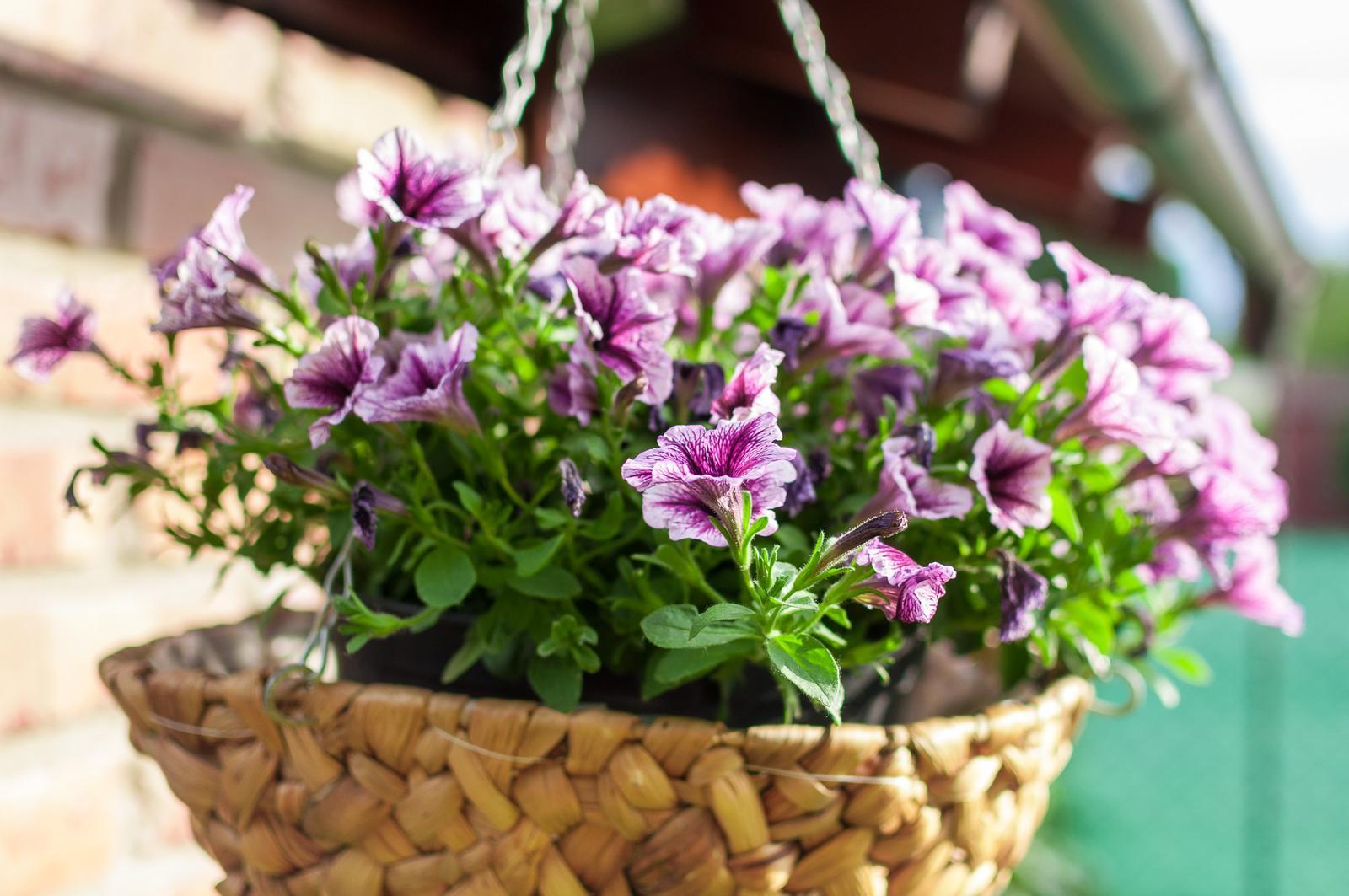 Záhrada pre oddych - Obrázok č. 51