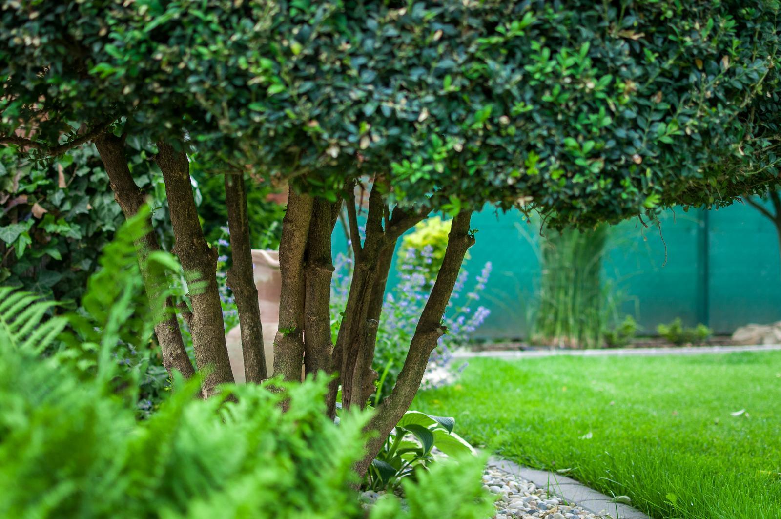 Záhrada pre oddych - Obrázok č. 54