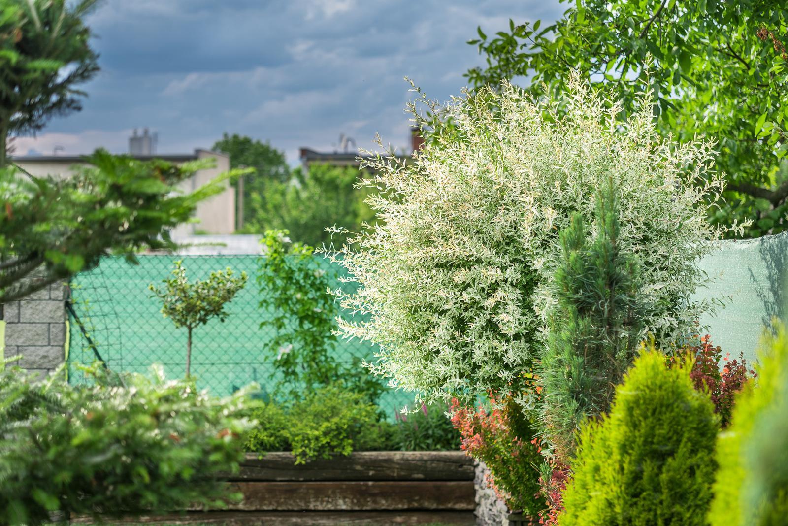 Záhrada pre oddych - Obrázok č. 56
