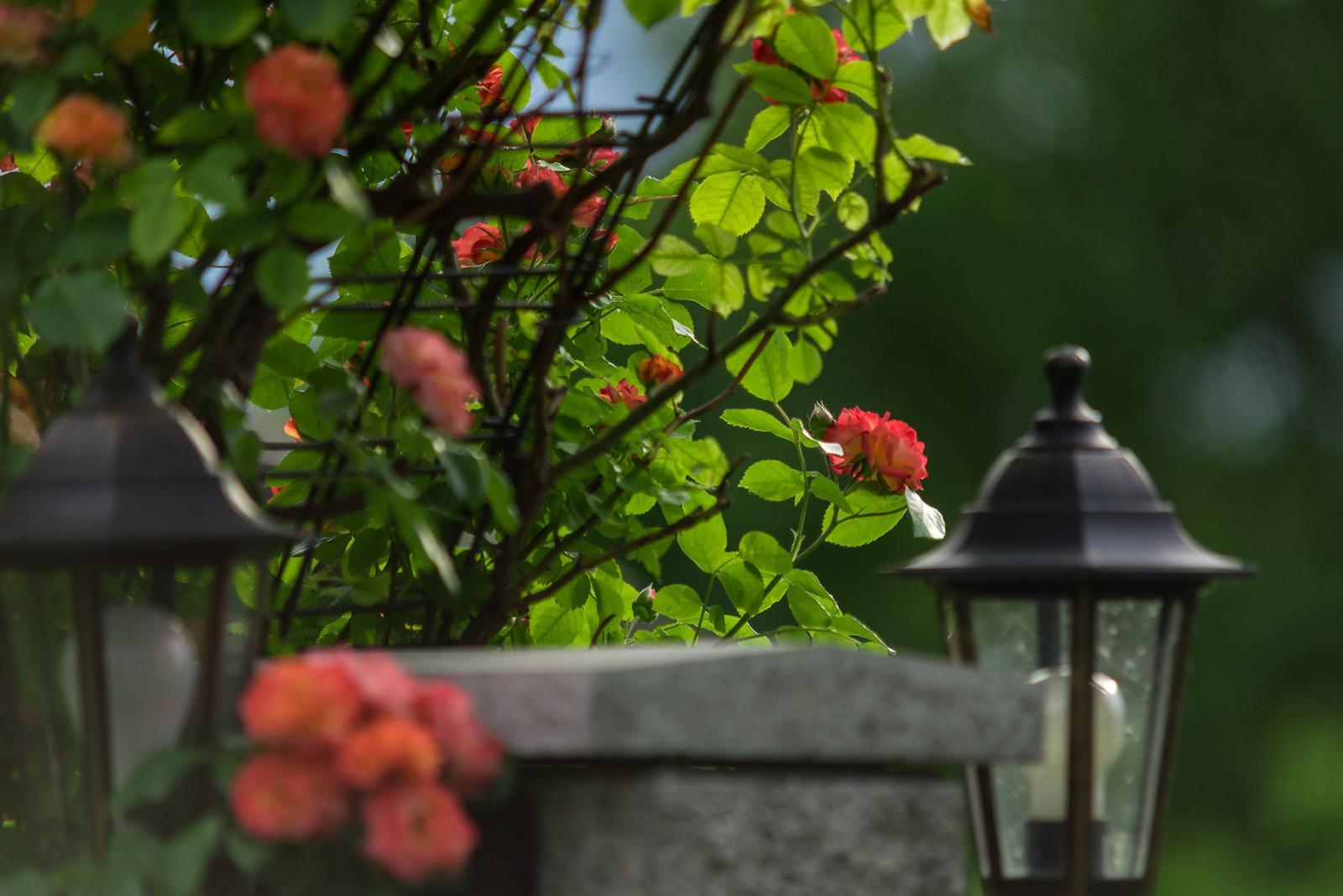 Záhrada pre oddych - Obrázok č. 57