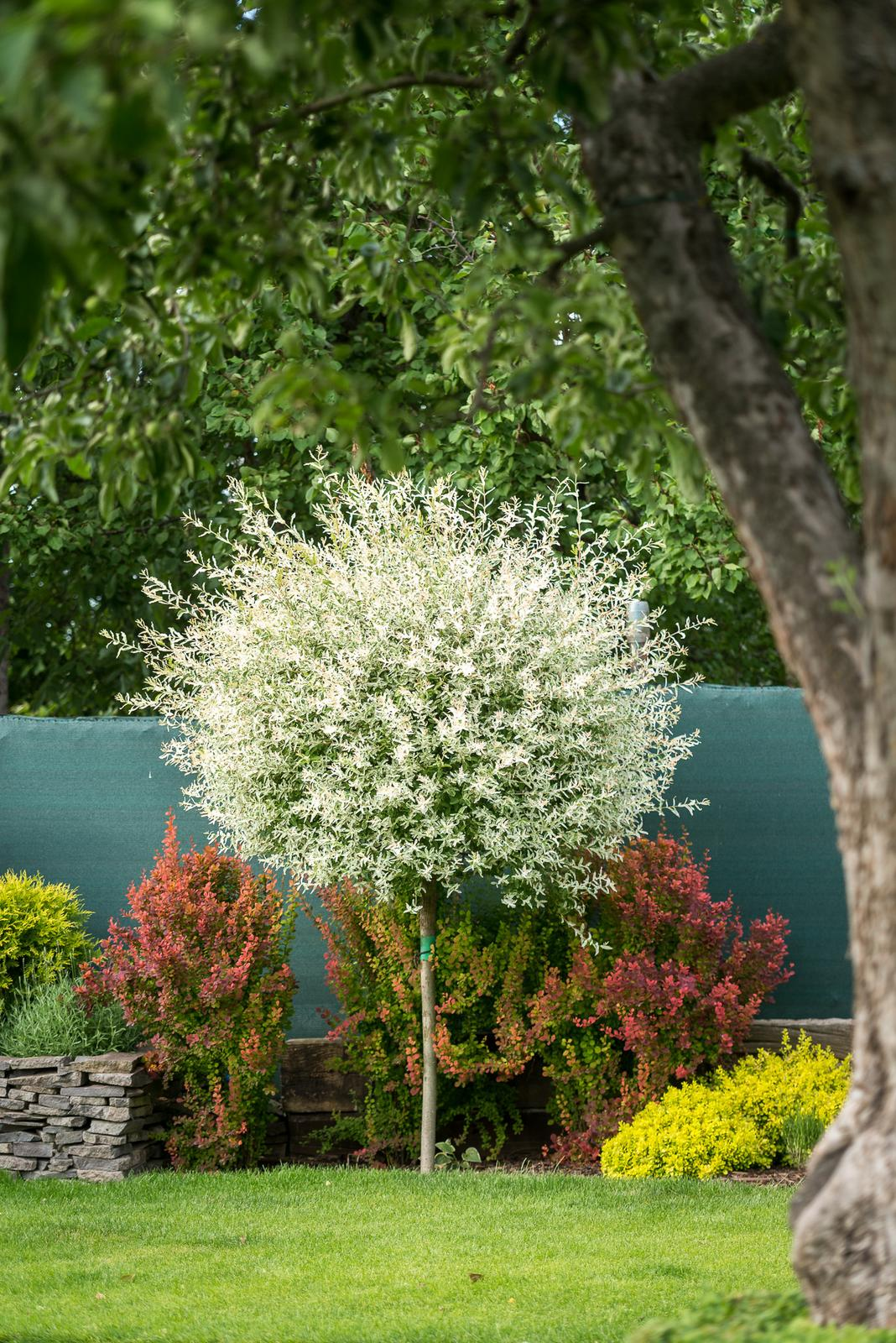 Záhrada pre oddych - Obrázok č. 58