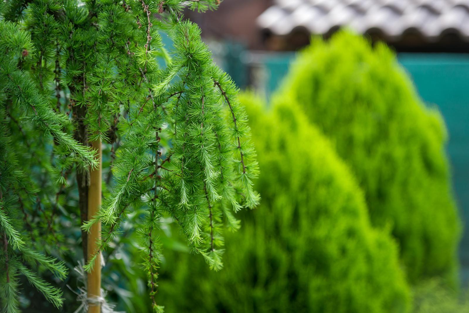 Záhrada pre oddych - Obrázok č. 63