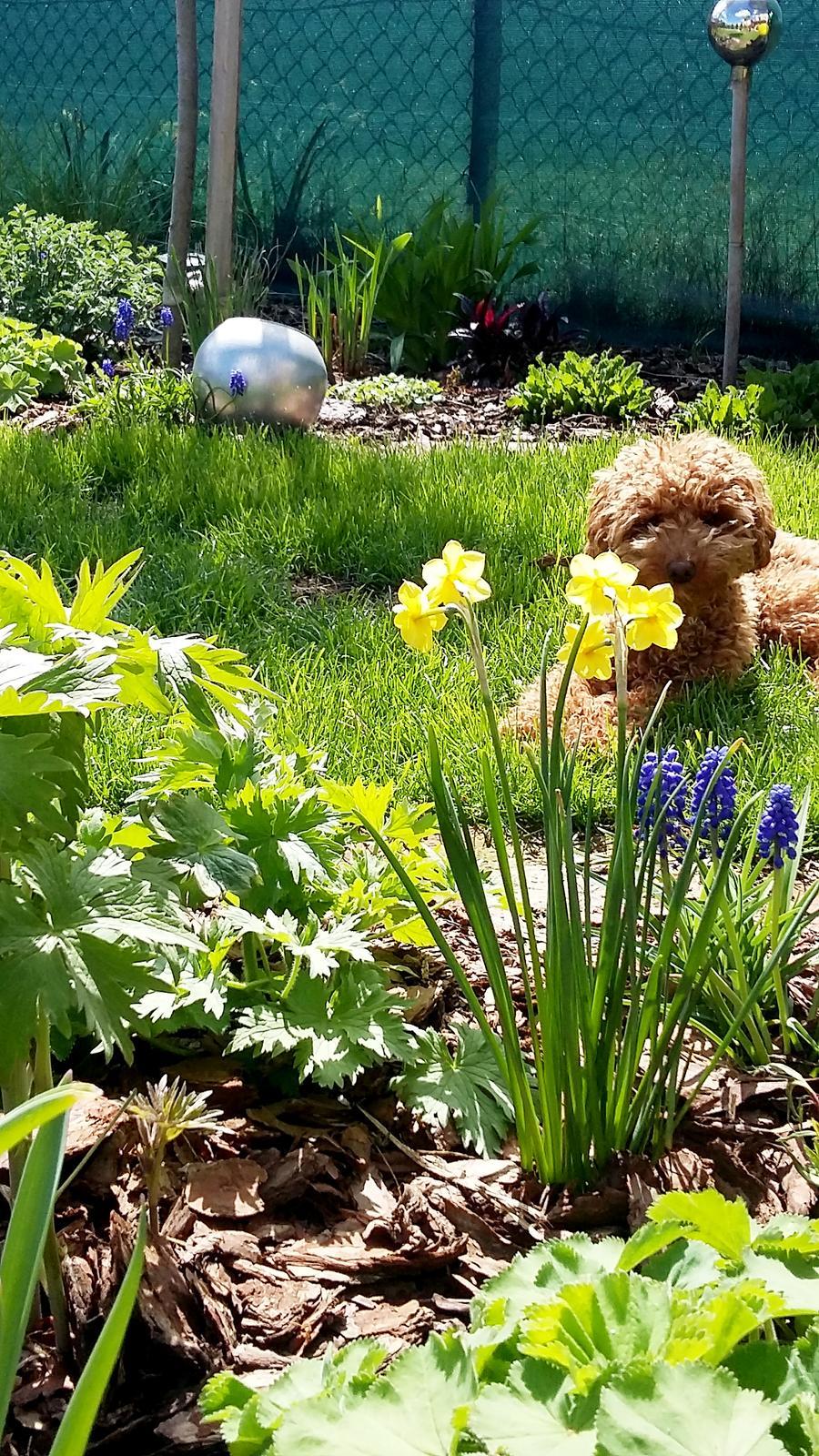 Malá milá záhrada :) - Obrázok č. 3