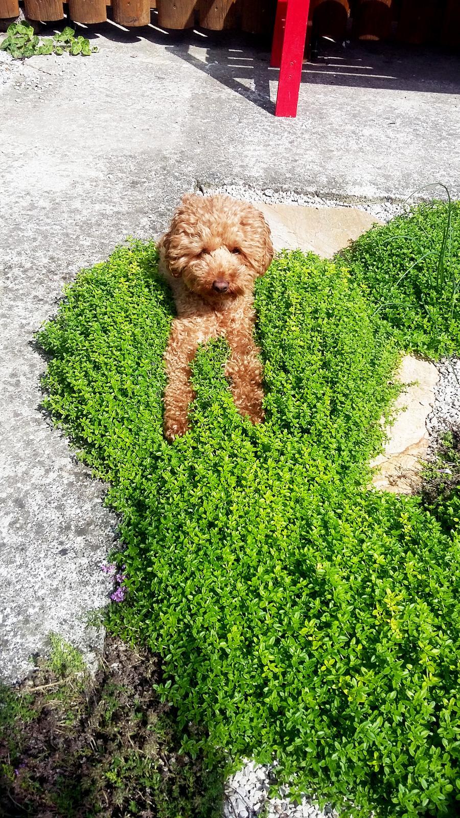 Malá milá záhrada :) - Obrázok č. 4
