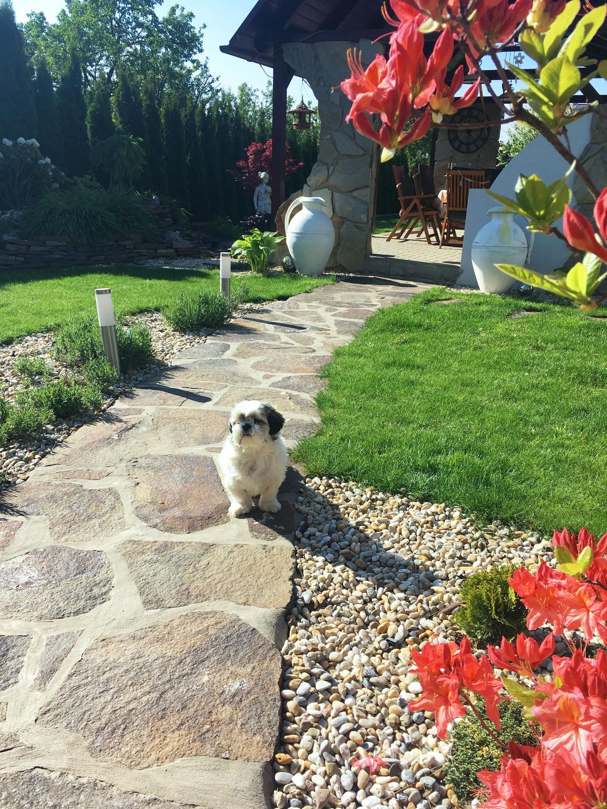 Záhrada s láskou robená - Obrázok č. 16