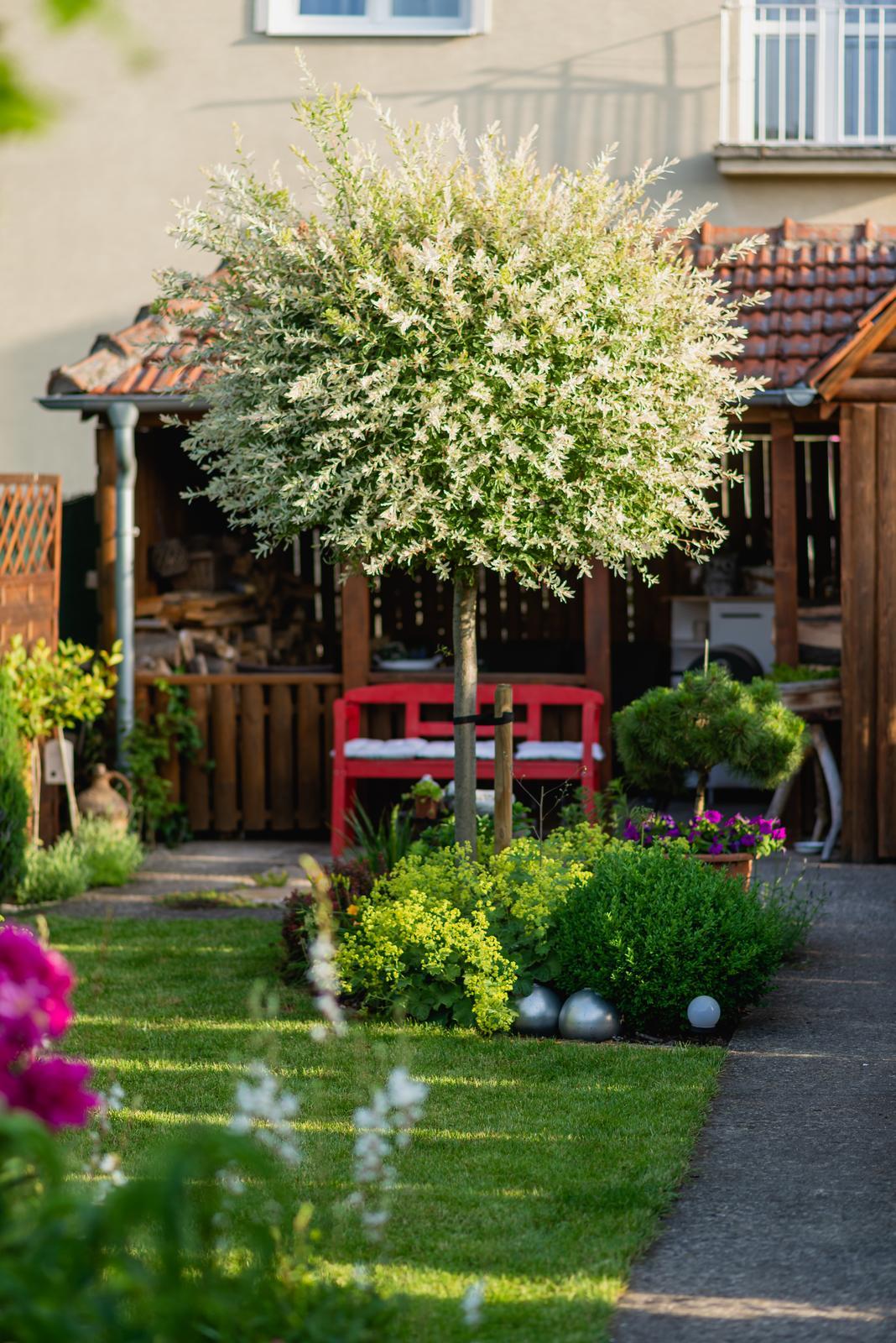 Malá milá záhrada :) - Obrázok č. 20