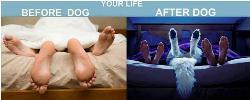Našla som na Dog fore. Milovníci a majitelia miláčikov vedia aká je to veľká pravda :))))