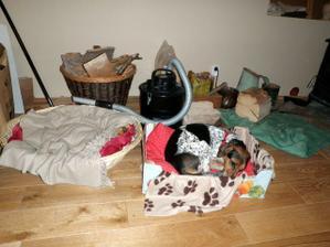 Preference psa - luxusní proutěný pelíšek nebo stará krabice? hmmm krabice vítězí...