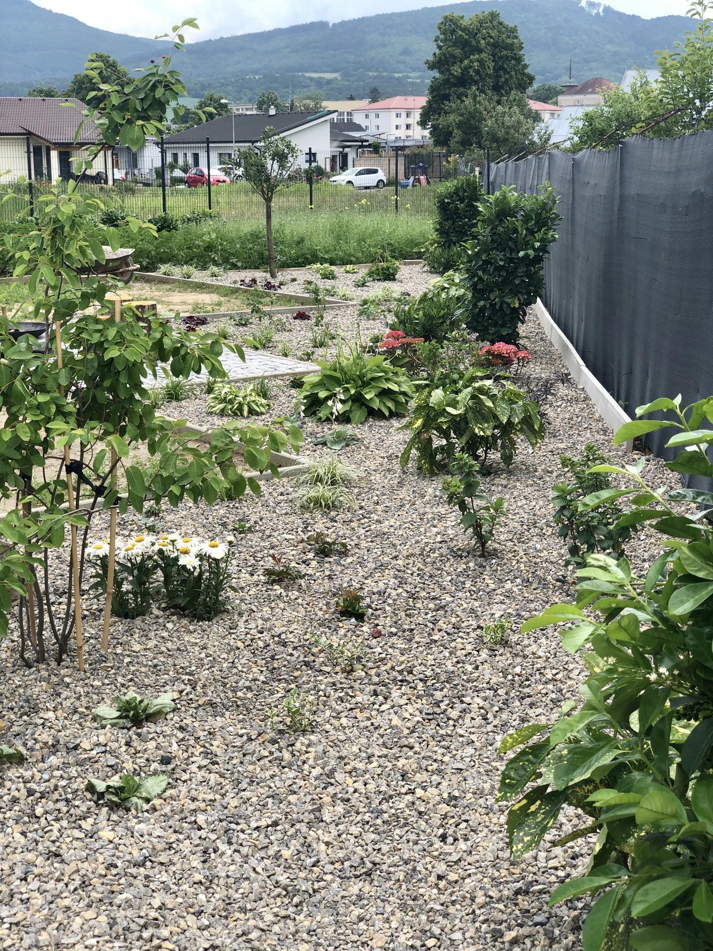 ...záhrada na Slnečnej... - Obrázok č. 25