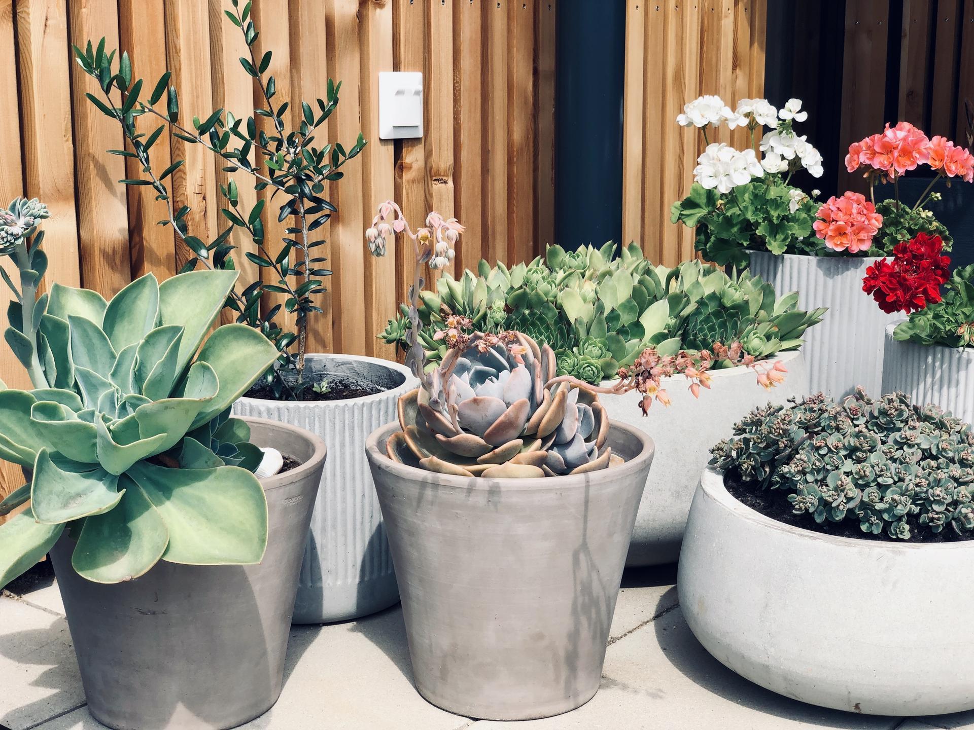 ...záhrada na Slnečnej... - Obrázok č. 51