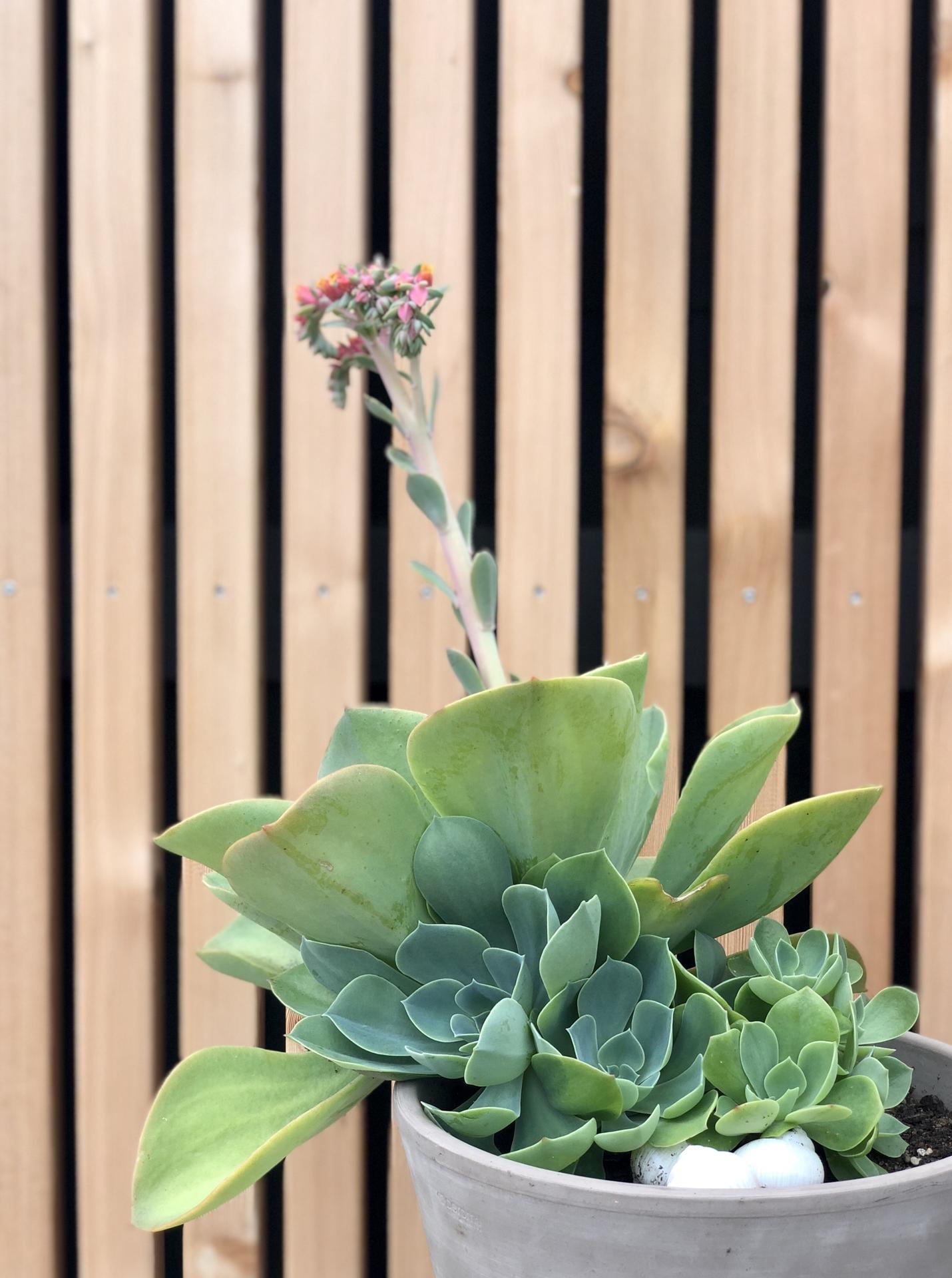 ...záhrada na Slnečnej... - Obrázok č. 57