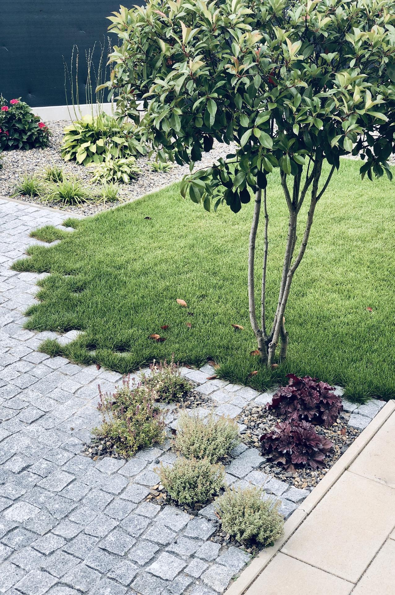 ...záhrada na Slnečnej... - Obrázok č. 56