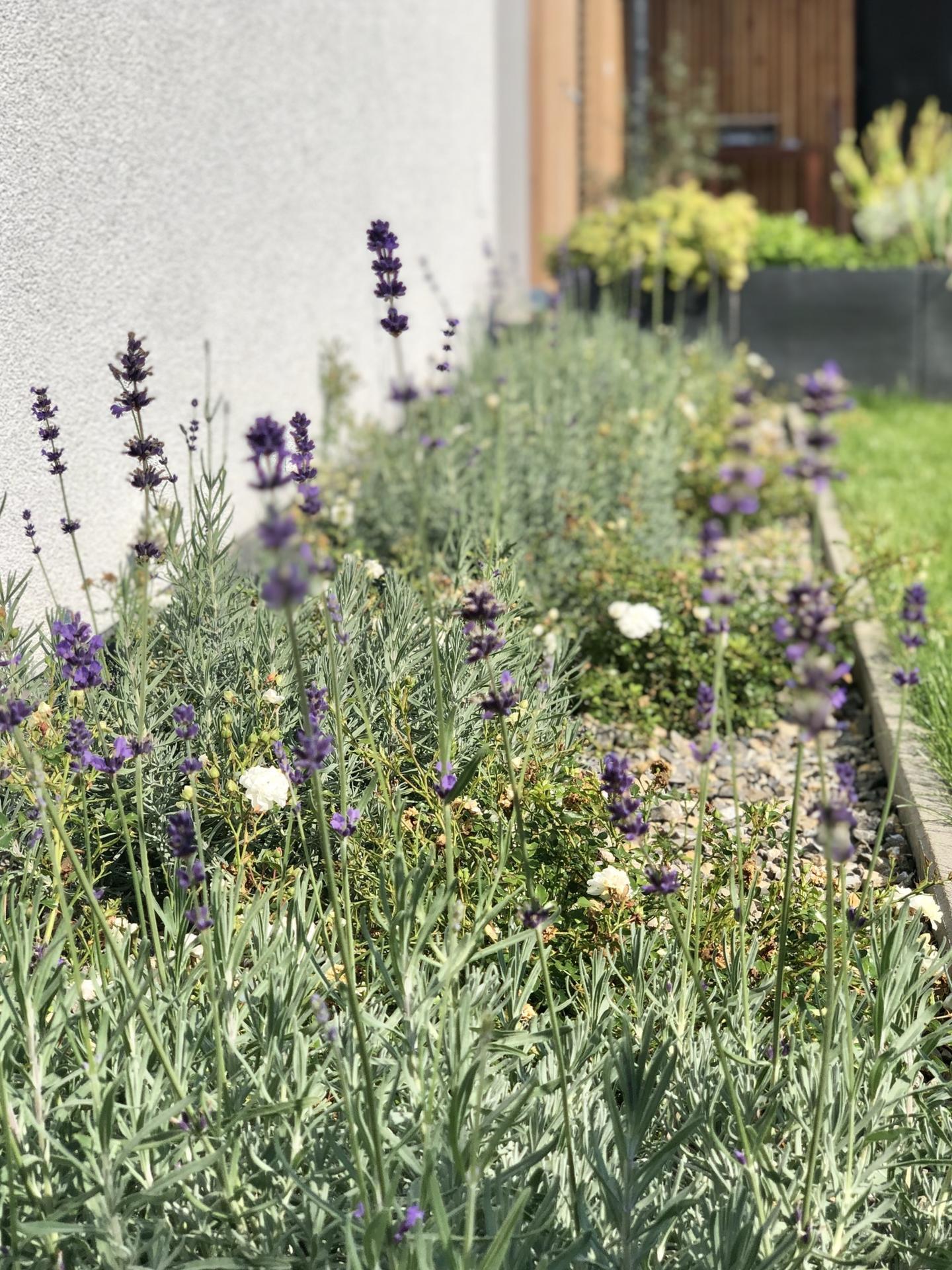 ...záhrada na Slnečnej... - Obrázok č. 72