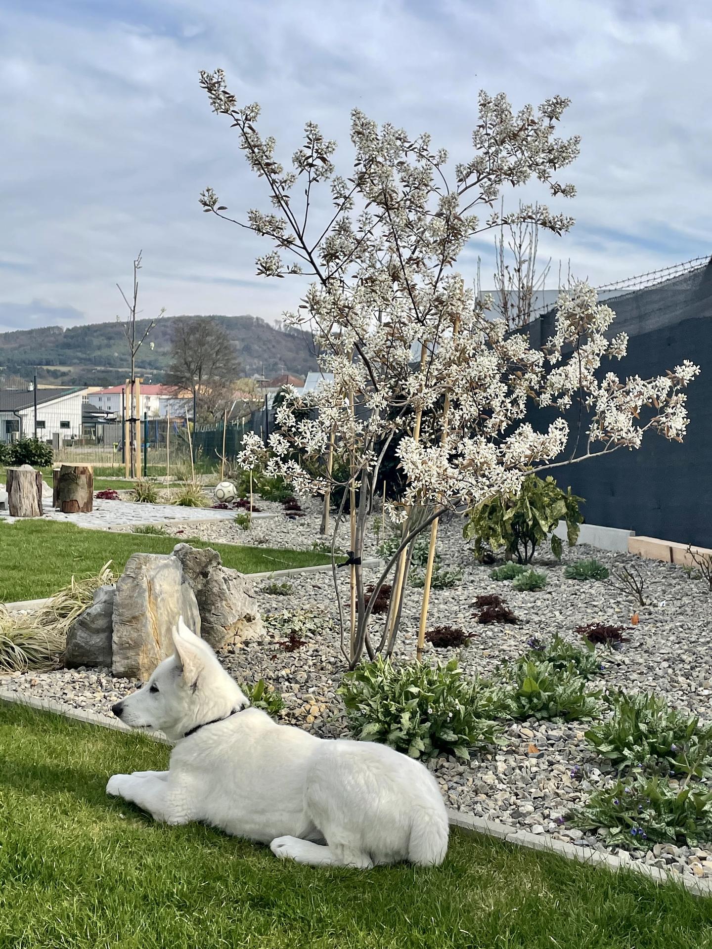 ...záhrada na Slnečnej... - …jar 2021