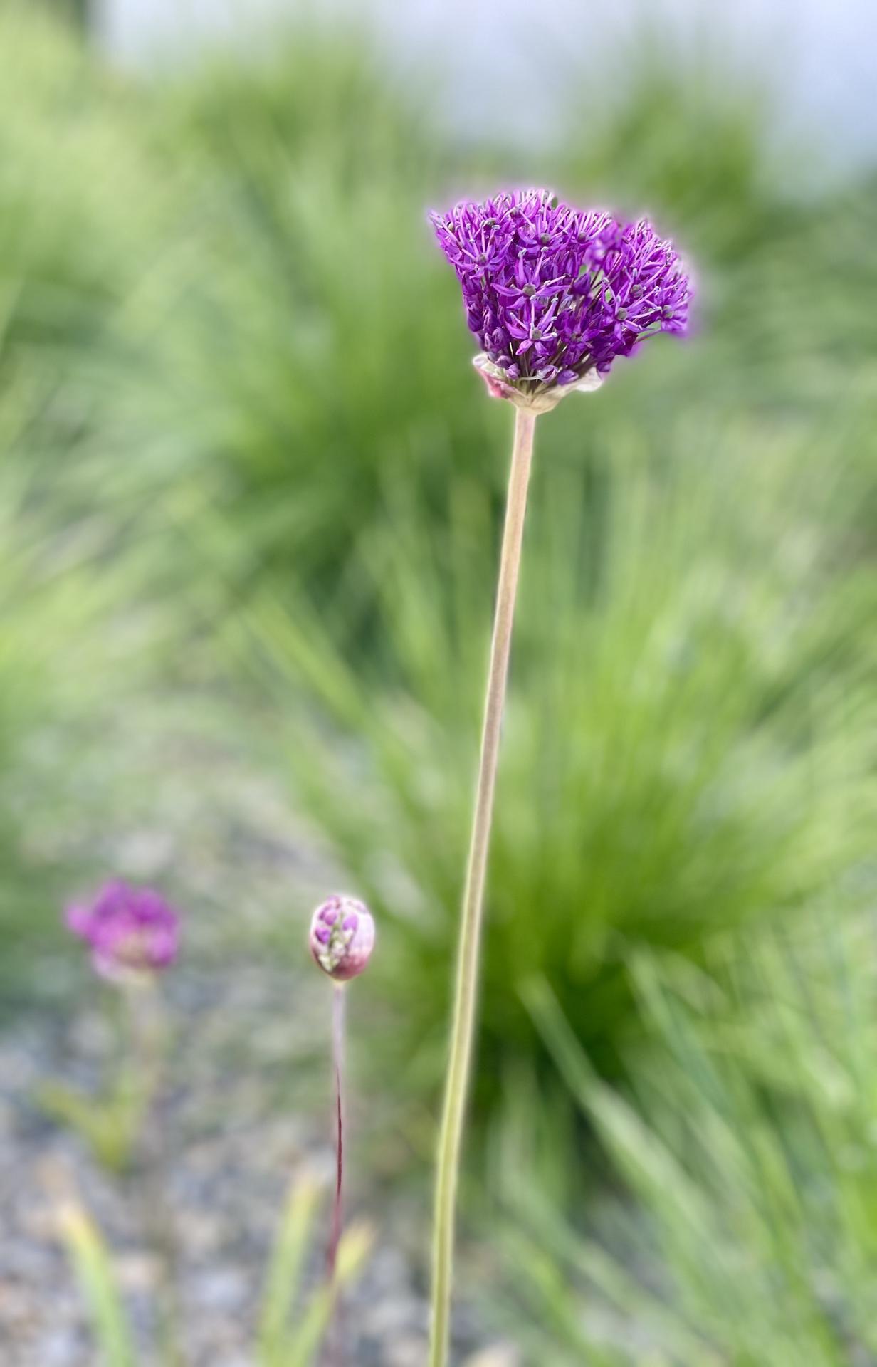 ...záhrada na Slnečnej... - Obrázok č. 96