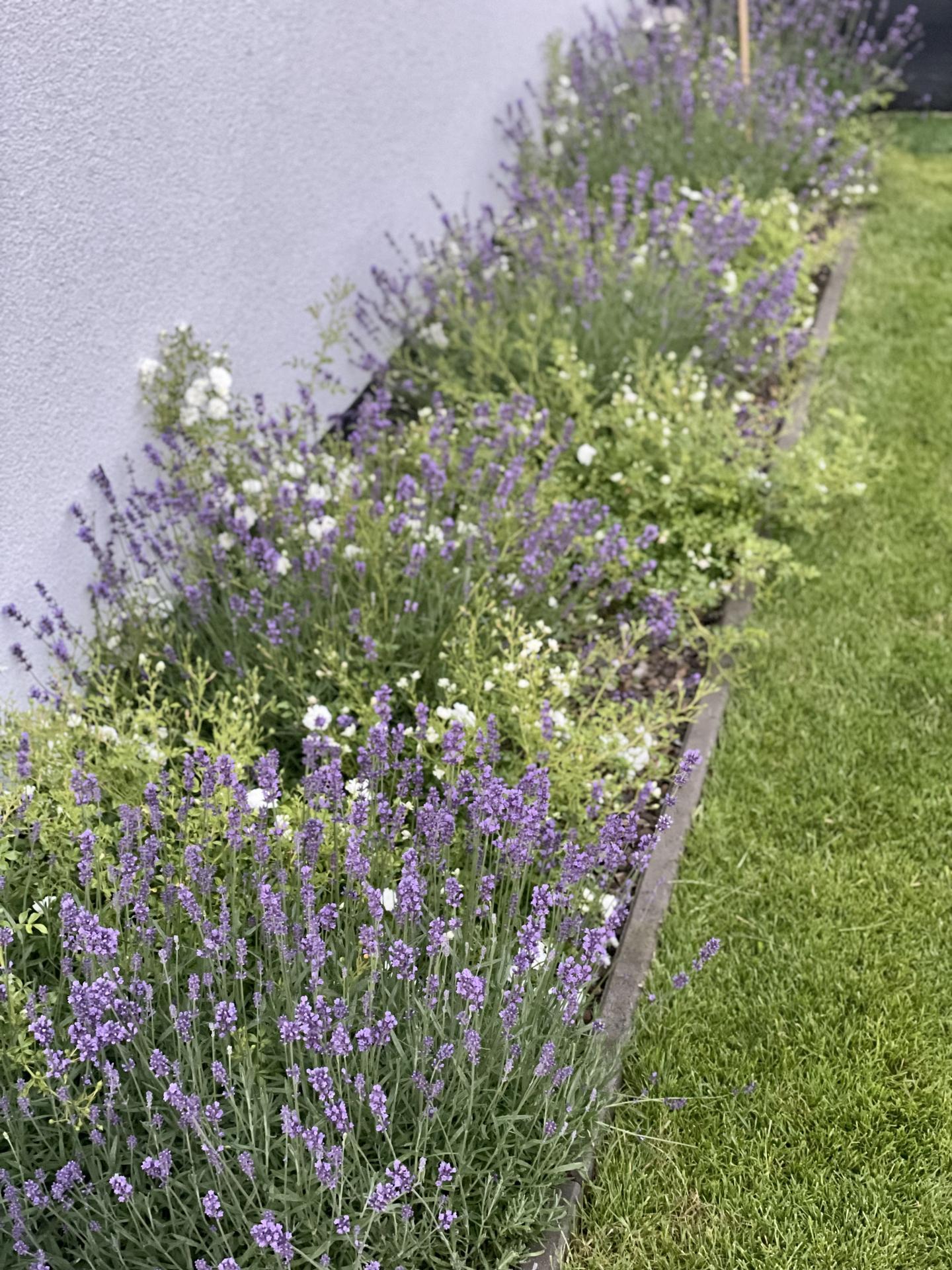 ...záhrada na Slnečnej... - Obrázok č. 133