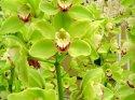 Orchidea, líbí se mi barva