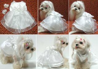 V tomto bude oblečená Lili:-)