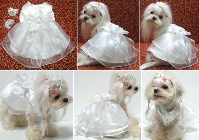 ♥Renuška♥ a ♥Raduško♥ - V tomto bude oblečená Lili:-)