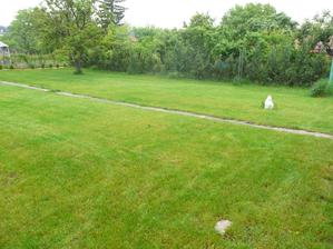 cerstvo pokosena zahradka dnes rano, este pred dazdom :)