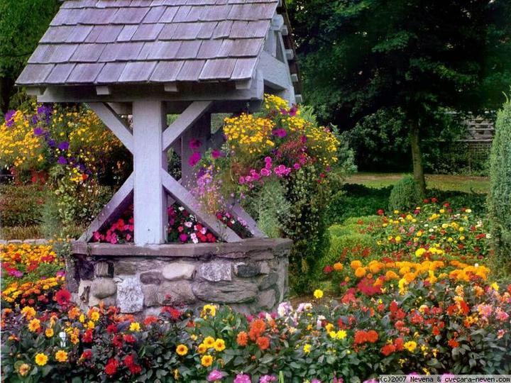 Život na záhrade - Obrázok č. 84
