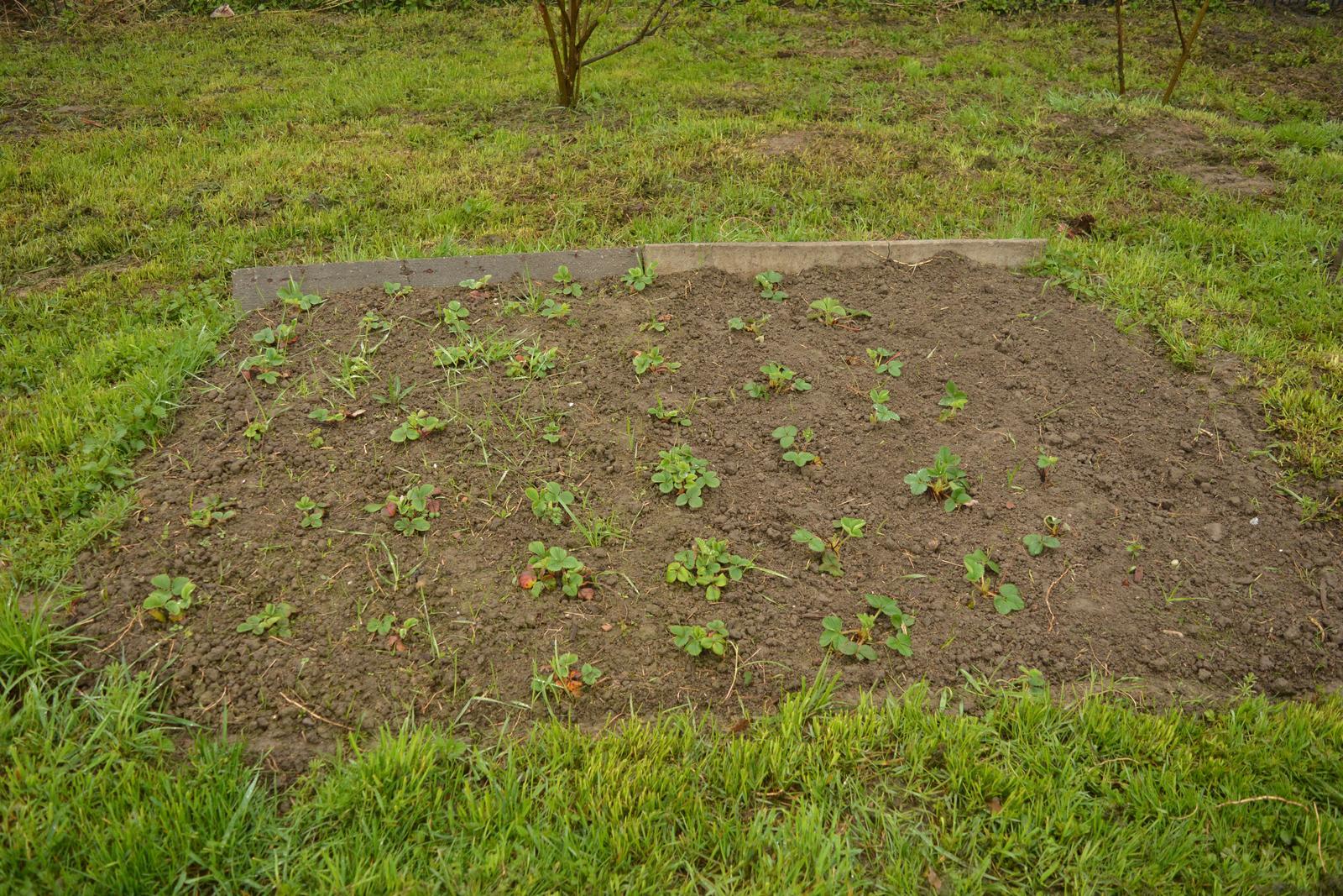 Náš nový domov ... - Můj záhon s jahodama ... zakládala jsem letos, tak tráva pořád hodně prorůstá a totálně blbě se to pleje :D .. ale snad se počasí umoudří a někdy to pročistím :D