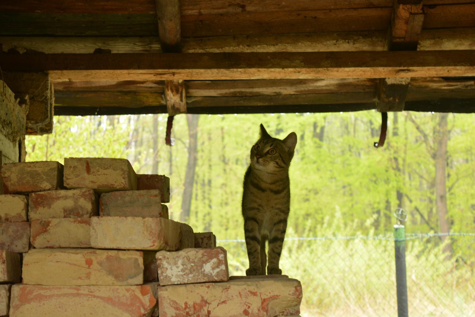 "Náš nový domov ... - Kočičky už si tu říkají ""doma"" .."