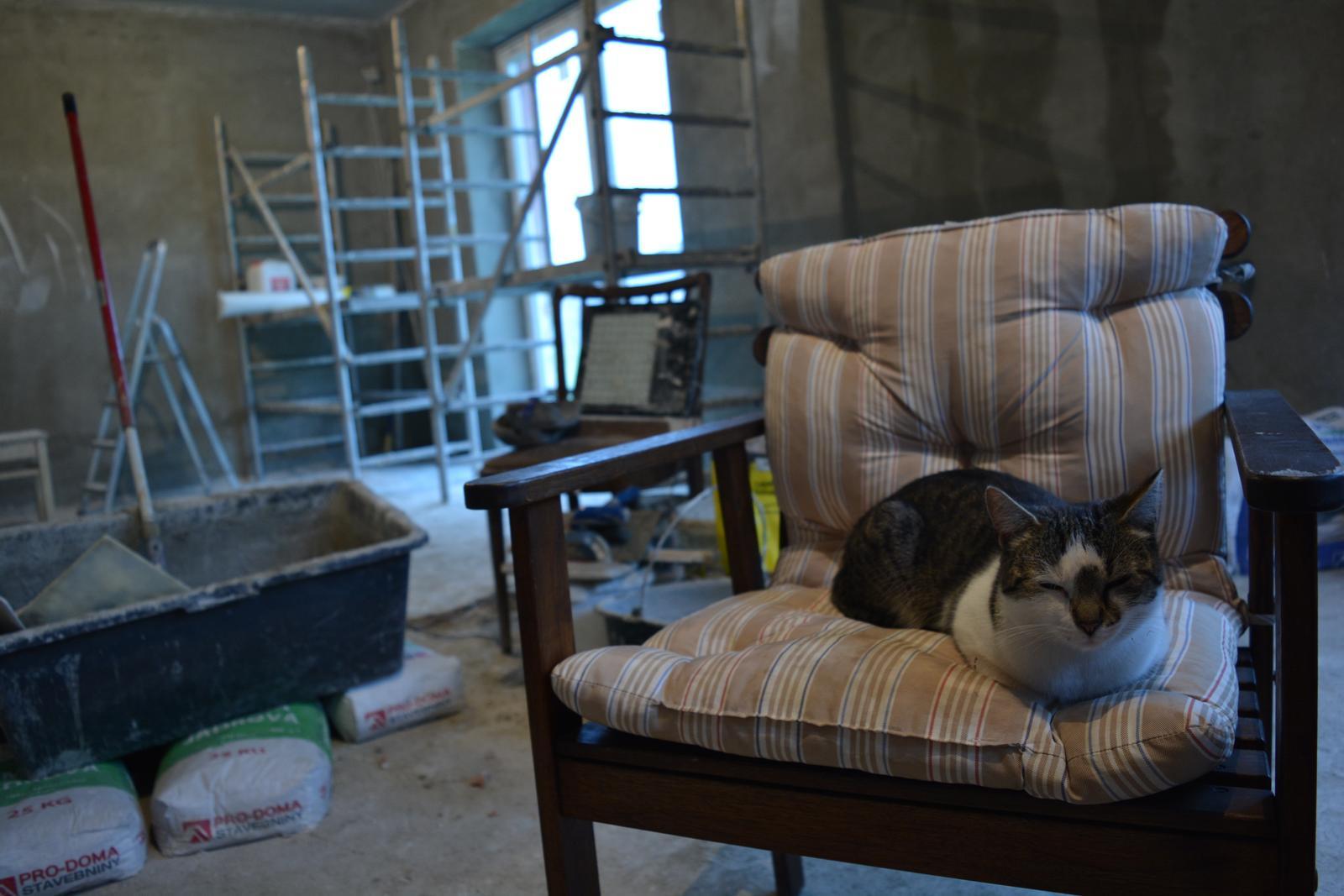Náš nový domov ... - Kočičky jako vždy s námi všude a stále :D