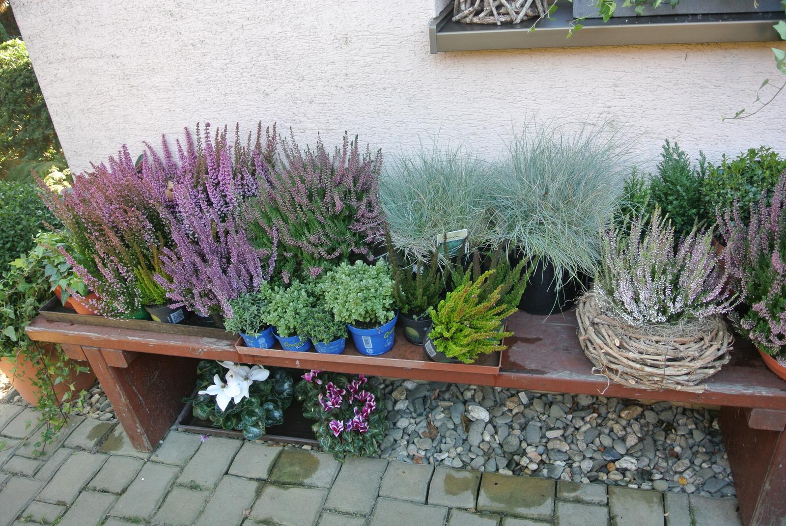 """Okrasná zahrada - můj malý """"ráj"""" - Obrázek č. 4"""