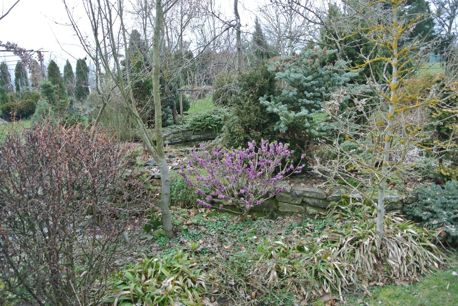 """Okrasná zahrada - můj malý """"ráj"""" - Obrázek č. 16"""