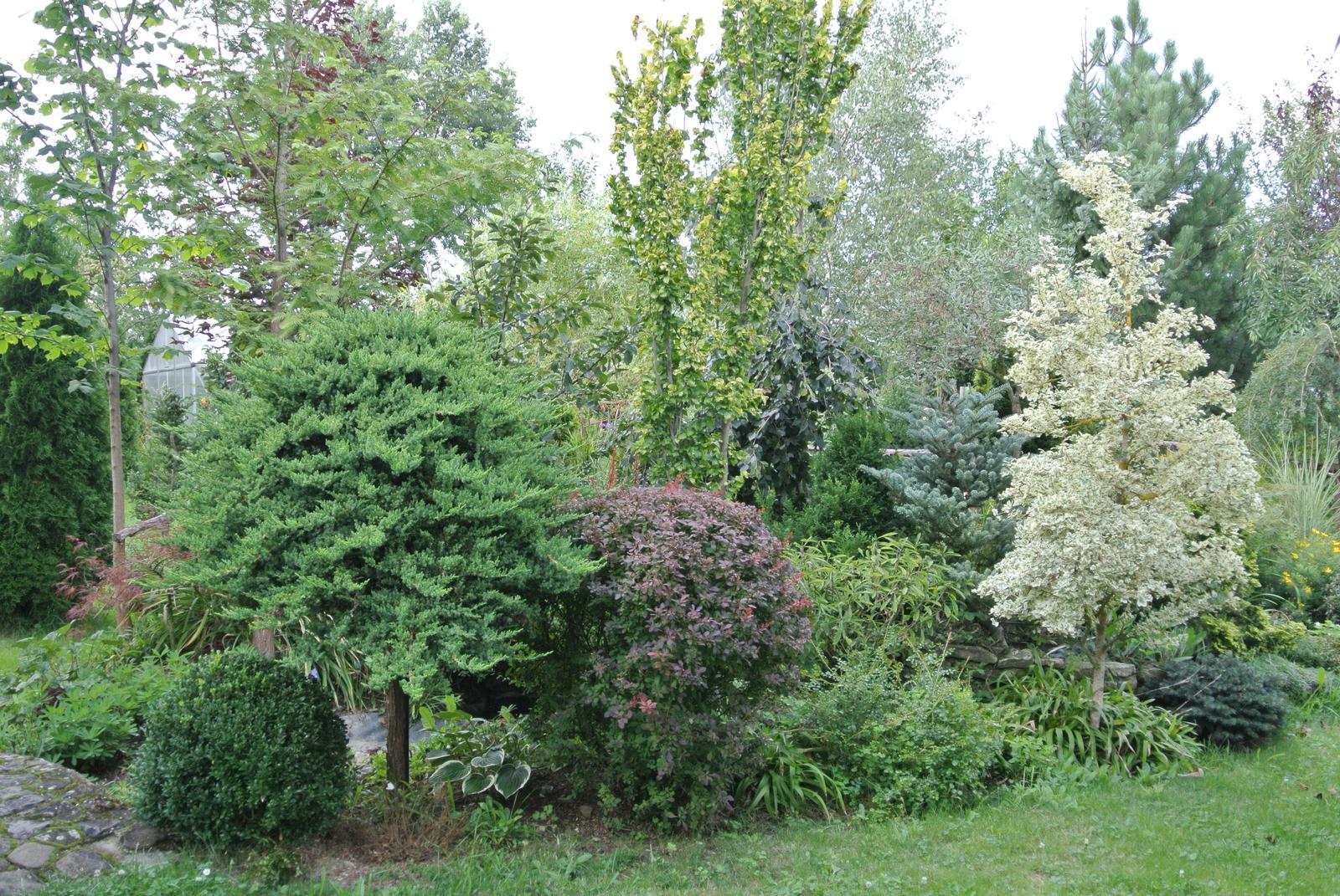 """Okrasná zahrada - můj malý """"ráj"""" - Obrázek č. 20"""