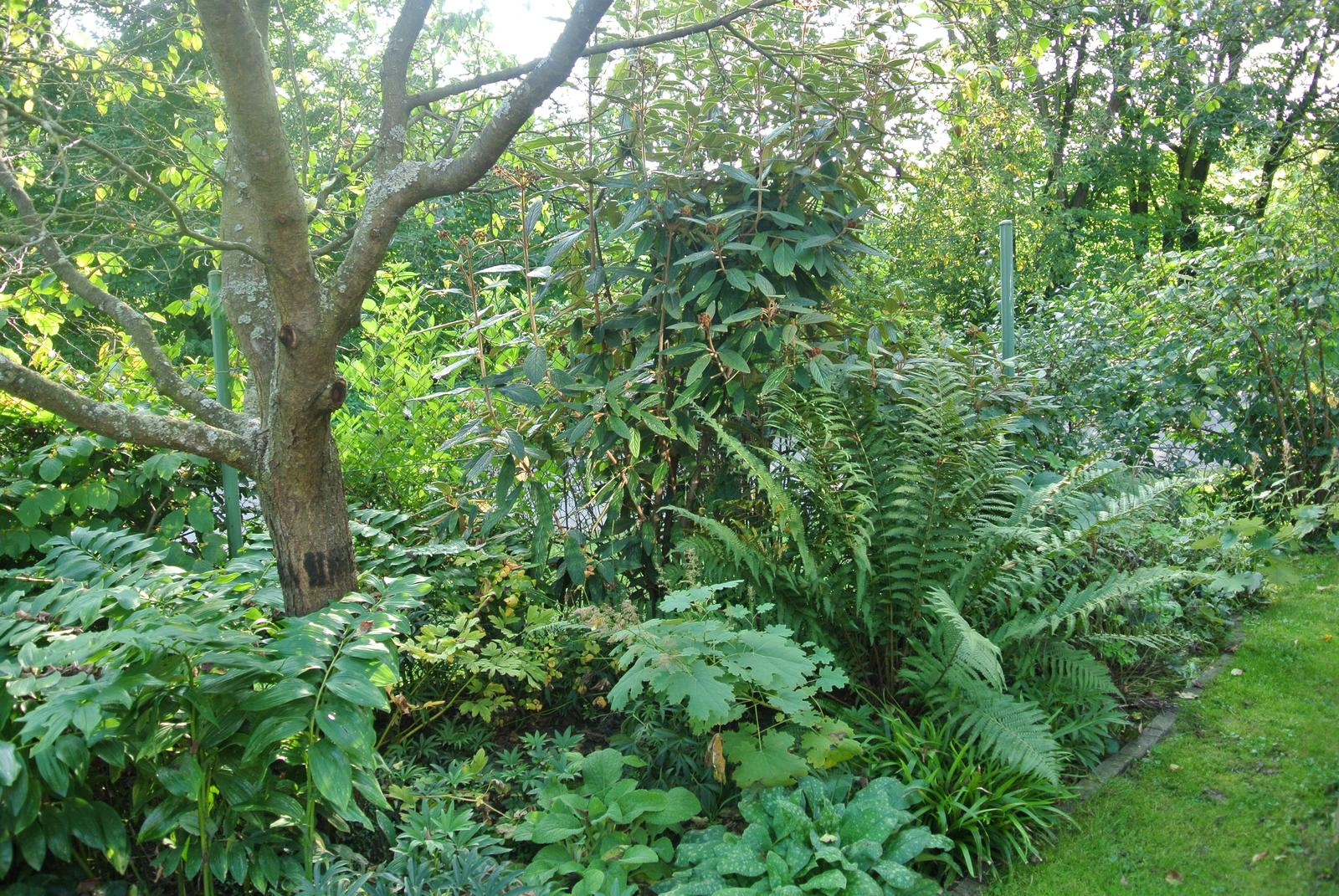 """Okrasná zahrada - můj malý """"ráj"""" - Obrázek č. 23"""