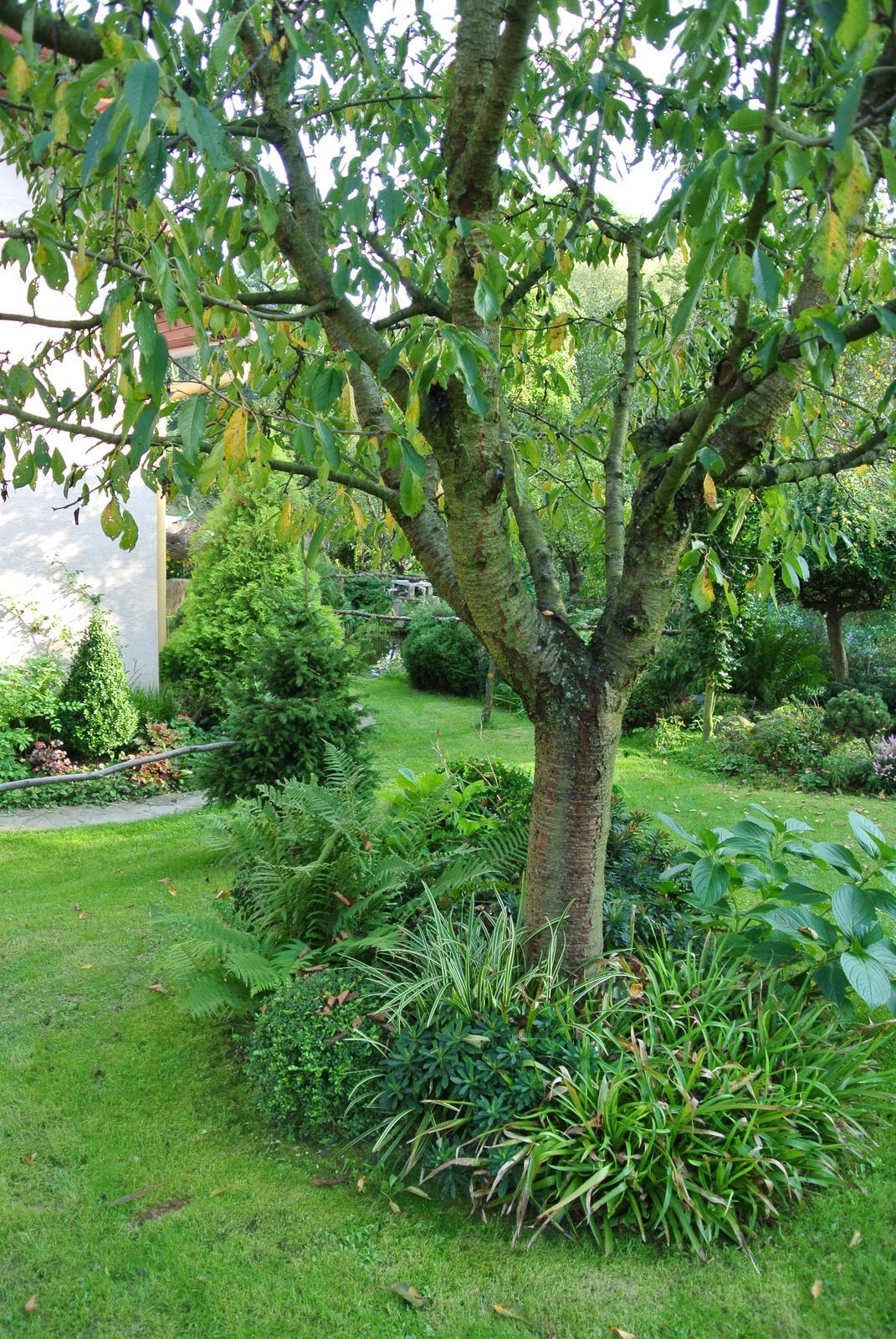 """Okrasná zahrada - můj malý """"ráj"""" - Obrázek č. 26"""