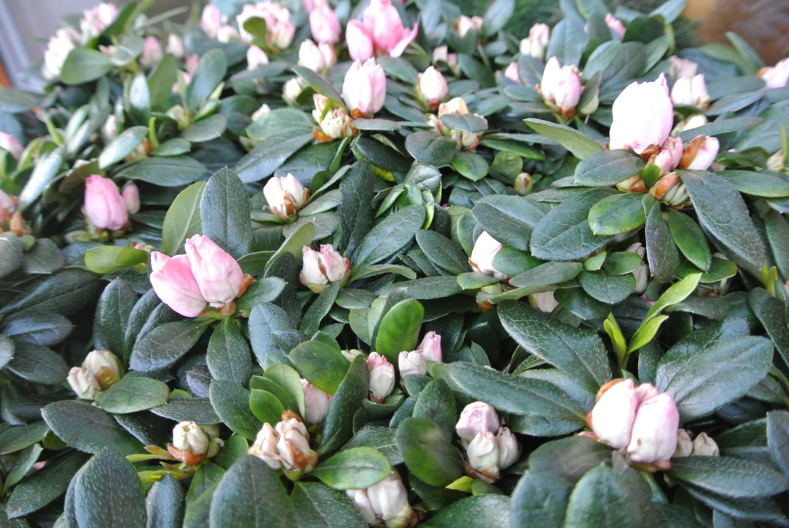 """Okrasná zahrada - můj malý """"ráj"""" - Obrázek č. 29"""