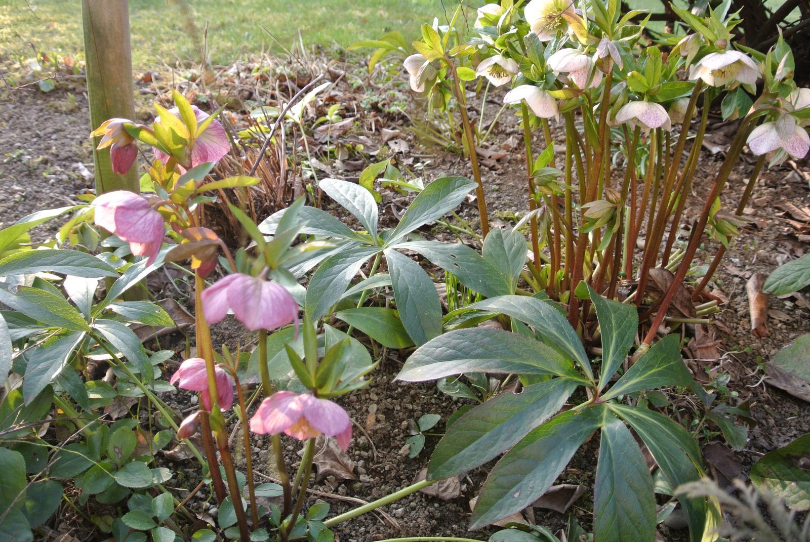 """Okrasná zahrada - můj malý """"ráj"""" - Obrázek č. 31"""