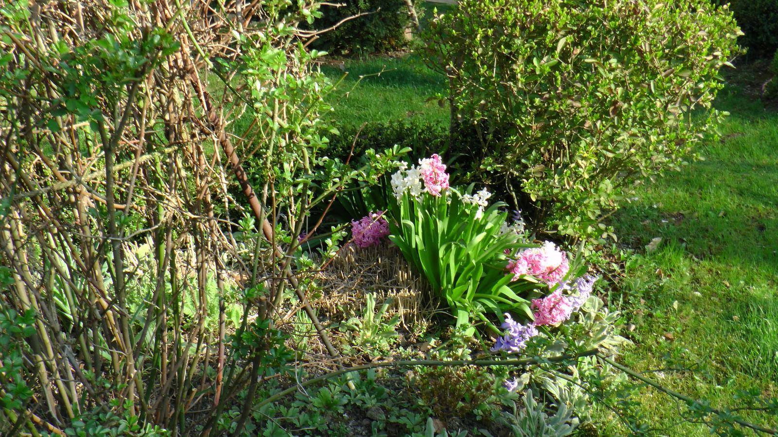 """Okrasná zahrada - můj malý """"ráj"""" - Obrázek č. 42"""
