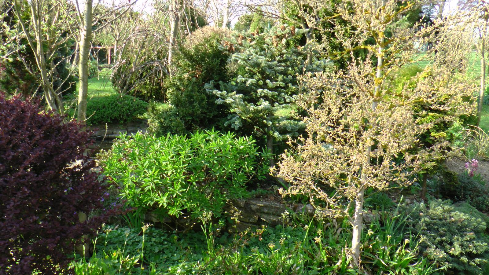 """Okrasná zahrada - můj malý """"ráj"""" - Obrázek č. 44"""