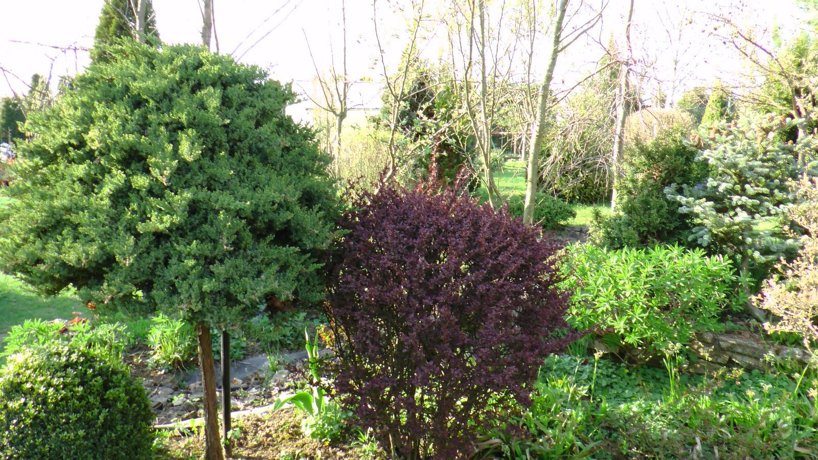 """Okrasná zahrada - můj malý """"ráj"""" - Obrázek č. 45"""