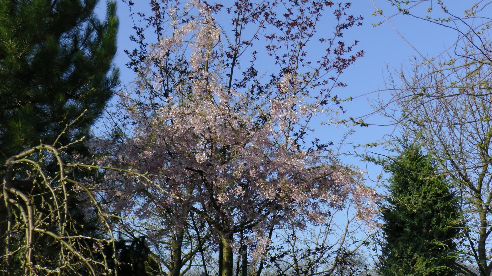 """Okrasná zahrada - můj malý """"ráj"""" - Obrázek č. 46"""