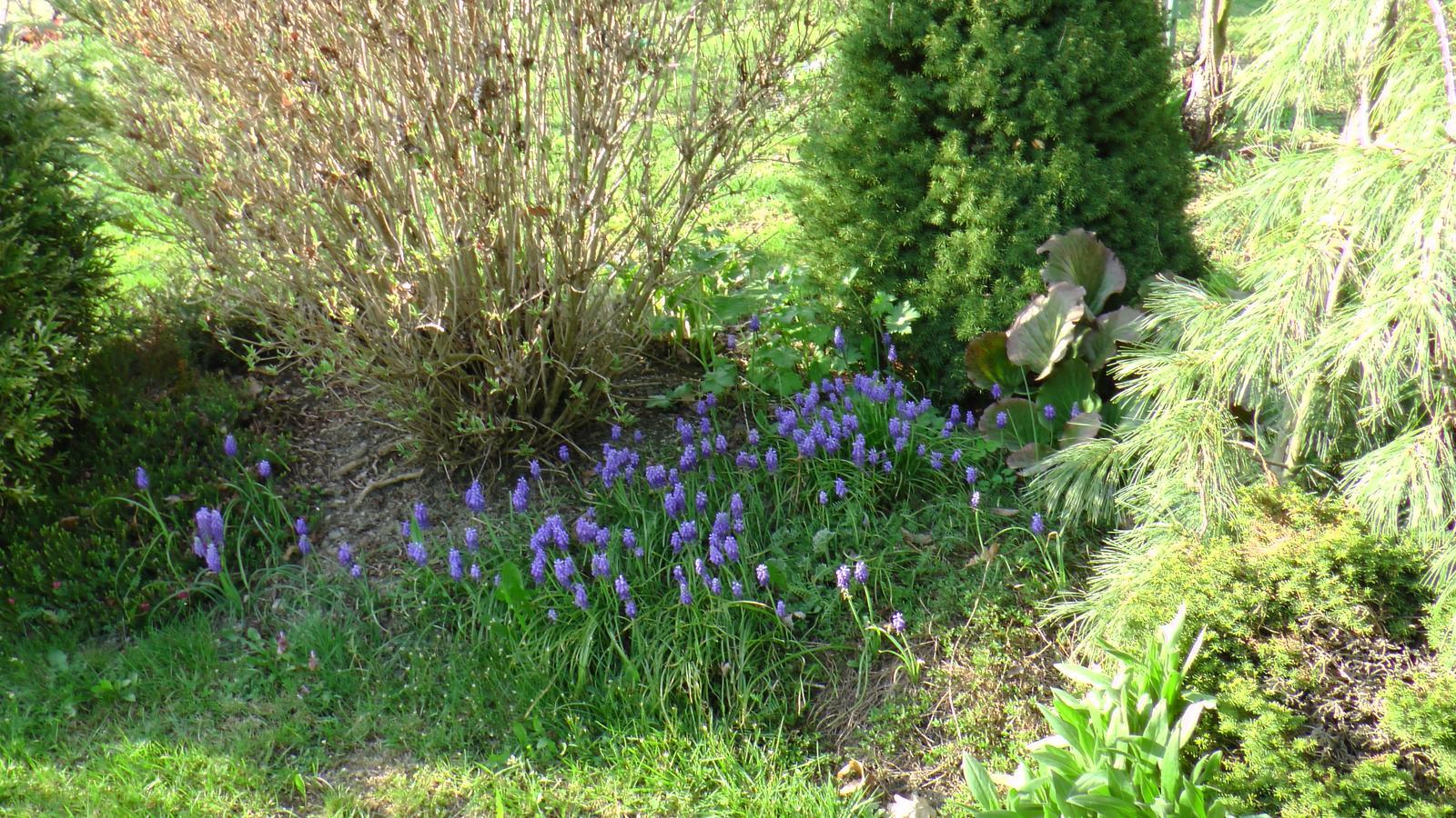 """Okrasná zahrada - můj malý """"ráj"""" - Obrázek č. 47"""