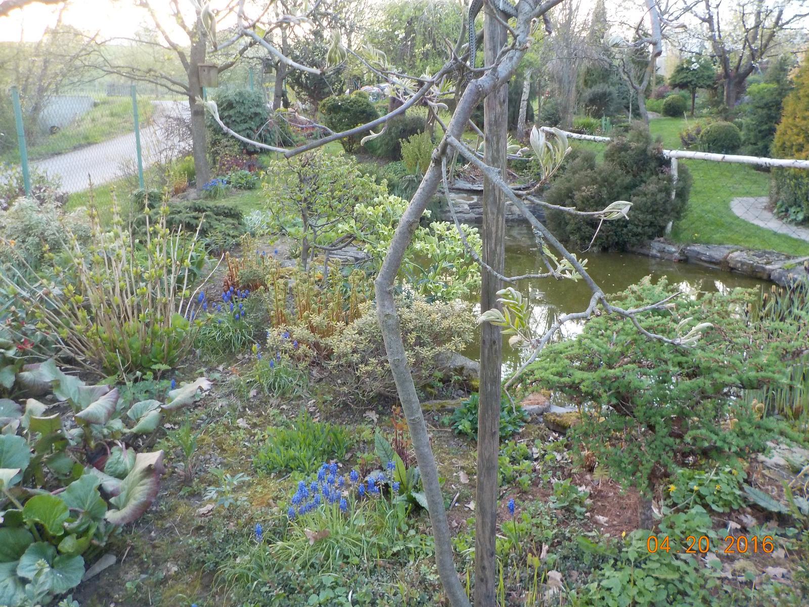 """Okrasná zahrada - můj malý """"ráj"""" - Obrázek č. 49"""