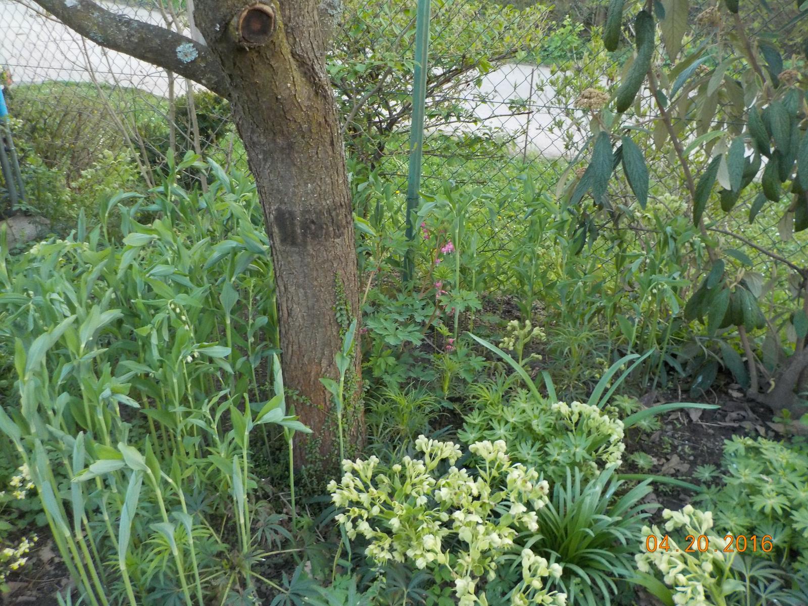 """Okrasná zahrada - můj malý """"ráj"""" - Obrázek č. 50"""
