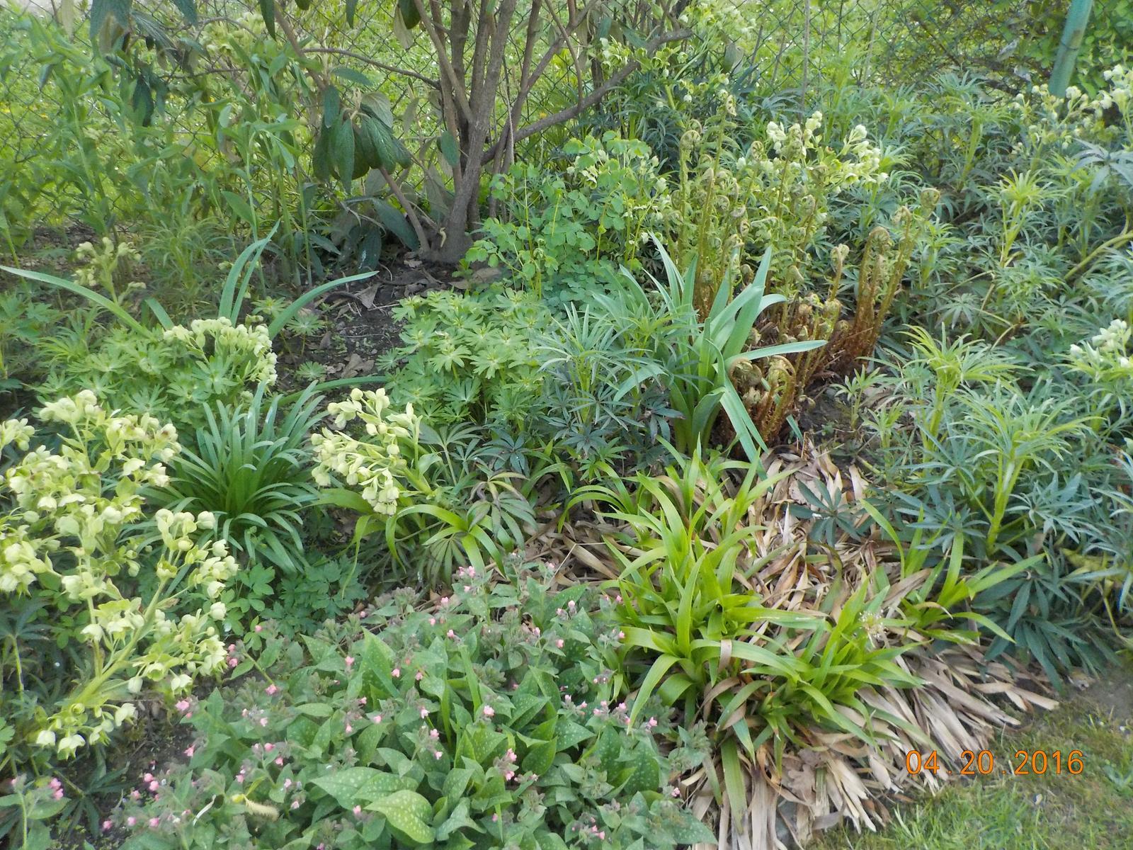 """Okrasná zahrada - můj malý """"ráj"""" - Obrázek č. 52"""