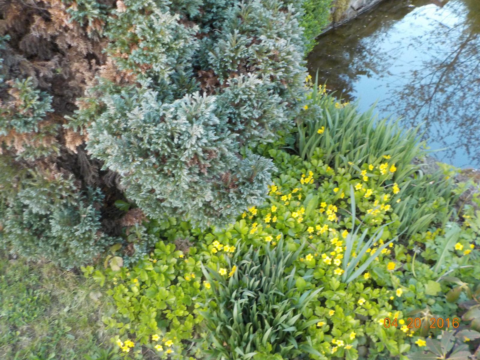 """Okrasná zahrada - můj malý """"ráj"""" - Obrázek č. 55"""
