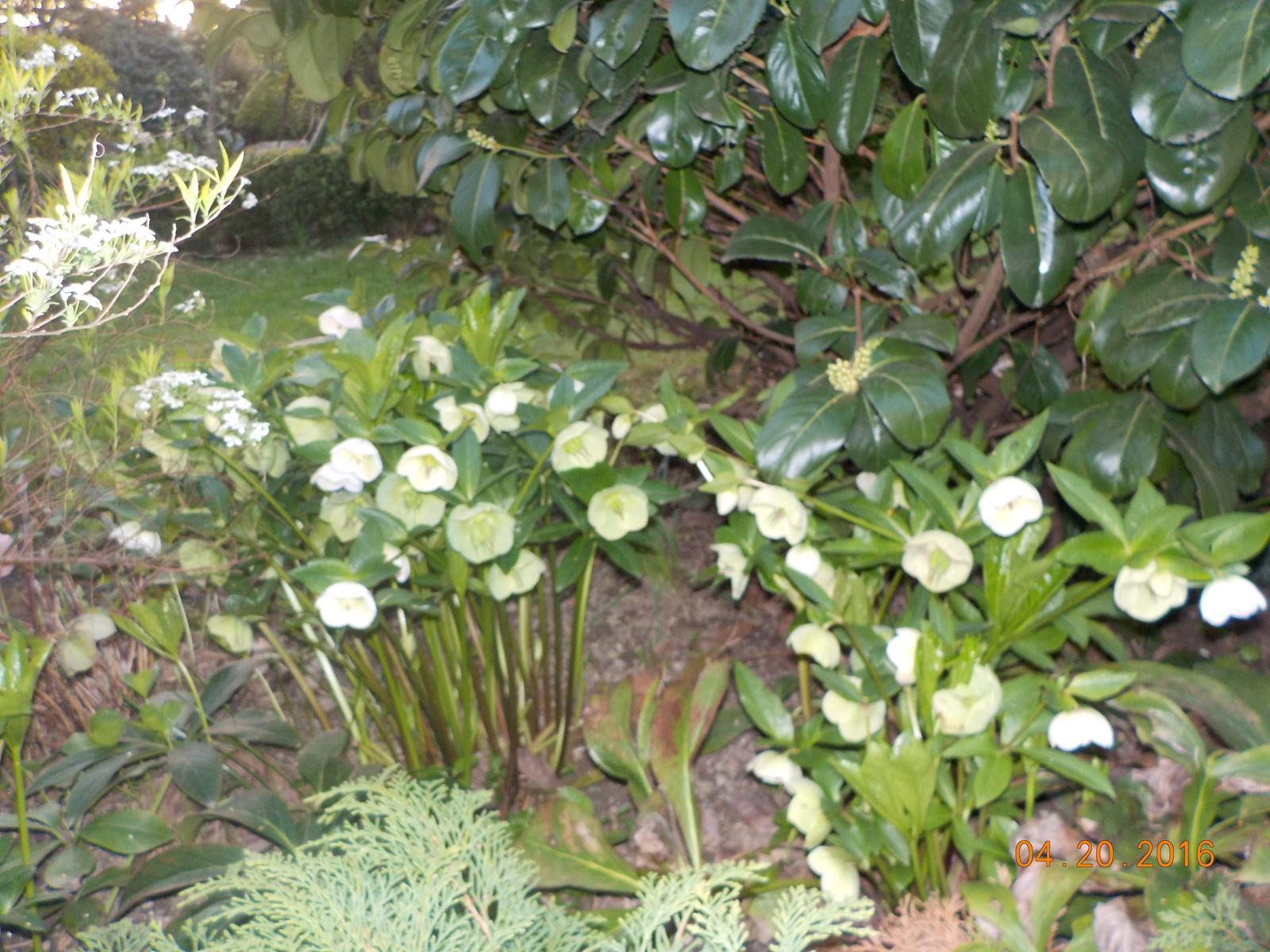 """Okrasná zahrada - můj malý """"ráj"""" - Obrázek č. 57"""