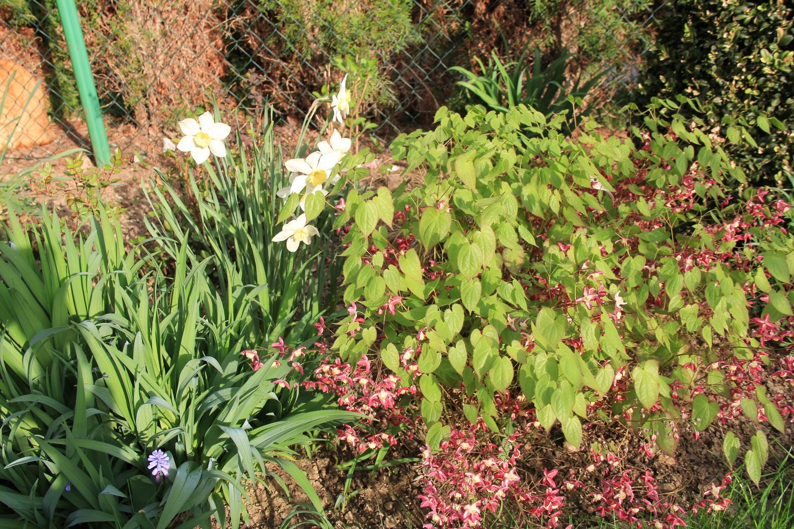 """Okrasná zahrada - můj malý """"ráj"""" - Obrázek č. 60"""
