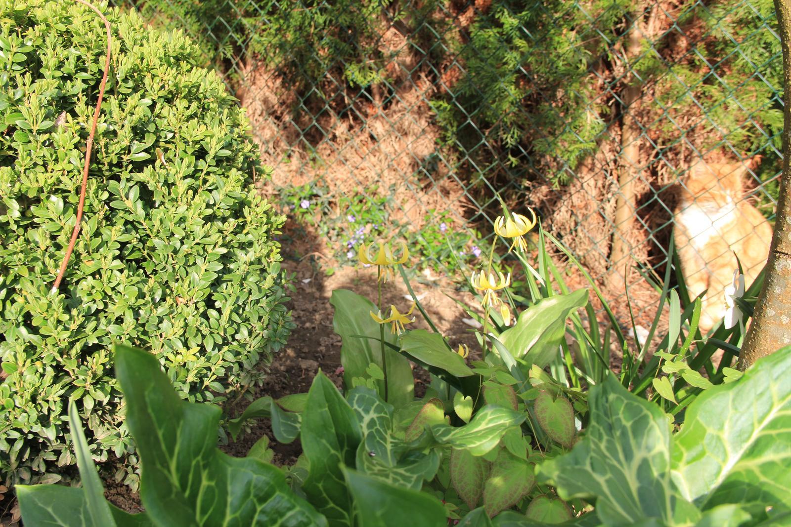 """Okrasná zahrada - můj malý """"ráj"""" - Obrázek č. 61"""