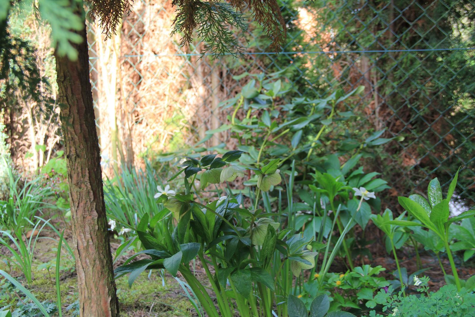 """Okrasná zahrada - můj malý """"ráj"""" - Obrázek č. 62"""